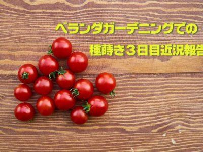ベランダガーデニング開始での種蒔き3日目近況報告